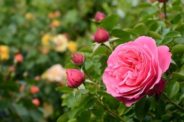 Blumen 1089
