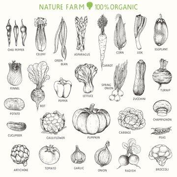 Set of hand drawn vegetables, vector illustration in vintage style.