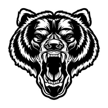 Angry bear face vector illustration. Furious angry face of bear with open mouth and terrible teeth as symbol of strength and aggressiveness. Grunge style  print for sport wear.
