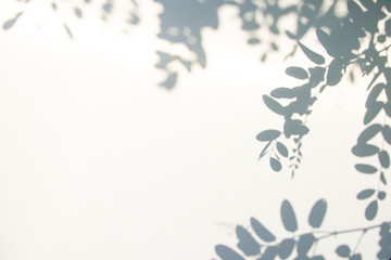 Abstract gray shadow background of natural leaves on white texture for background