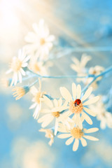 Yellow autumn flowers and a ladybug on a beautiful blue background. Romantic dreamy image. Selective focus.