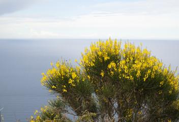 paesaggio e natura isola del Giglio Grosseto Italia