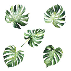 Montsera leaves watercolor clipart, tropical greenery, montsera clipart, tropical wedding, exotic plants, summer vibes 400 dpi