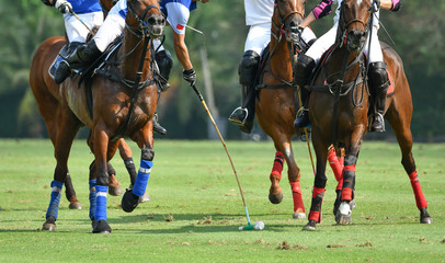 Action Shot Of the Polo Player