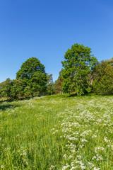 Flower meadow in a rural landscape in the summer