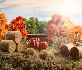 Three Large Outdoor Pumpkins in Hay Stack with  Orange Farmland Barn with Autumn Trees Background