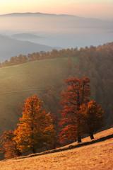 Autumn trees in Carpathians