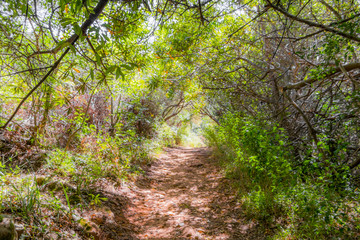 Dreamy landscape and nature forest. Hiking trail in the Tablemoutain National Park, Cape Town, South Africa.