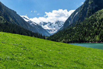 Wall Mural - Panoramic view of idyllic mountain scenery in the Alps with fresh green meadow and snowy covered mountain peaks, Zillertal Alps Nature Park, Austria, Tyrol, Stilluptal Lake