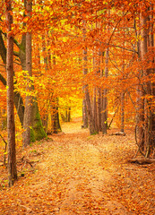 Wall Murals Road in forest Pathway in the forest at autumn