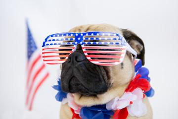 9573beb13ba4 Cute patriotic pug dog wearing american flag glasses