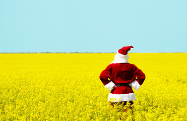 Christmas Santa Claus  in blooming yellow field. Spring vacation concept.