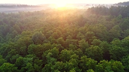 Wall Mural - Flying over green trees forest at sunrise. Morning sun and fog. Aerial shot, 4K