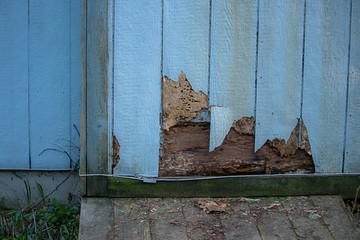 siding with cracks and bug damage on side of home
