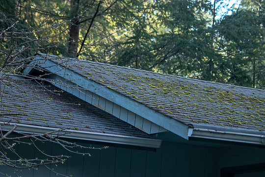 mossy green growth on roof line of old house