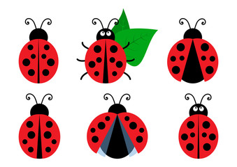 Fototapeta Set of colored cute ladybug icons. Vector illustration obraz