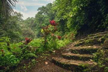 Footpath in the jungle. Bali trip. Stone steps. Panorama.