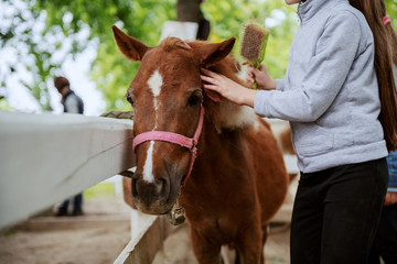 Picture of little Caucasian girl grooming adorable brown pony horse. Ranch exterior.