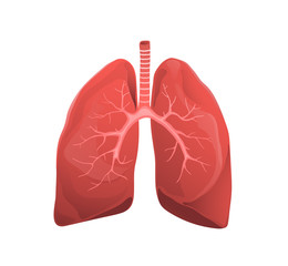 Human lungs realistic medicine flat vector illustration