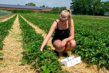 Junge Frau beim Erdbeeren pflücken auf dem Feld. Standort: Deutschland, Nordrhein-Westfalen, Heiden