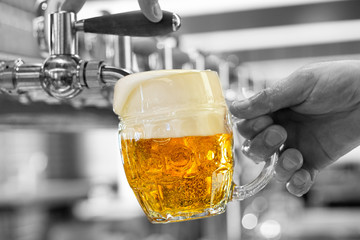 A man pouring draft lager beer into a dimpled glass mug  in a modern pub. Overflowing glass. Black and white background.