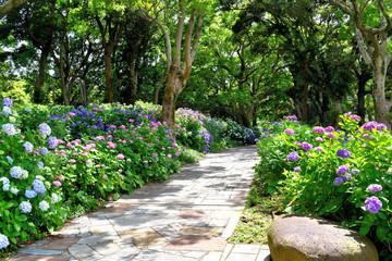 伊豆下田の紫陽花
