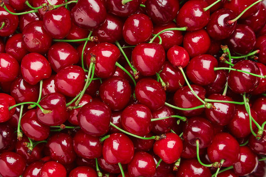Close up of pile of ripe cherries with stalks and leaves. Large collection of fresh red cherries. Ripe cherries background