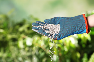 Woman in glove pouring fertilizer on blurred background, closeup with space for text. Gardening time