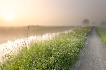 Wall Mural - beautiful misty summer morning along river