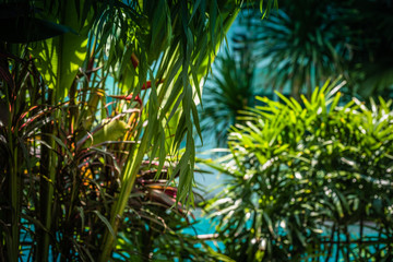 Tropical jungle. Scenic view of greenery in tropical jungle. Wall mural