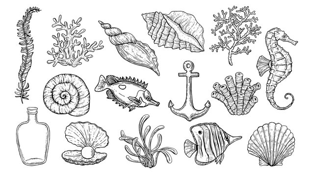 Sea shell, seaweed, anchor, seahorse, and fish. Hand drawn underwater creatures.