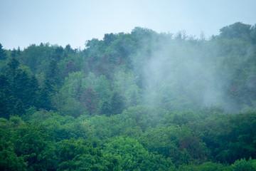 Wald Nebel Moody