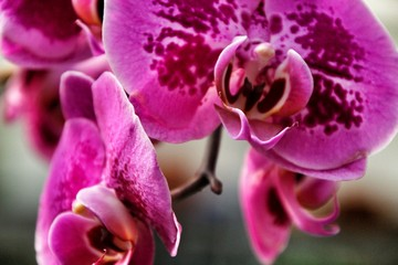 Phalenopsis Orchid plants in the garden in Spring