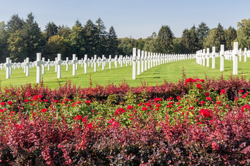 American WW2 Cemetery with rose bush and headstones in Luxembourg