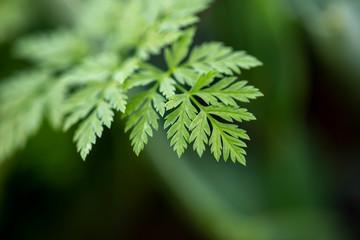 Green Leaf , Ecology Concept