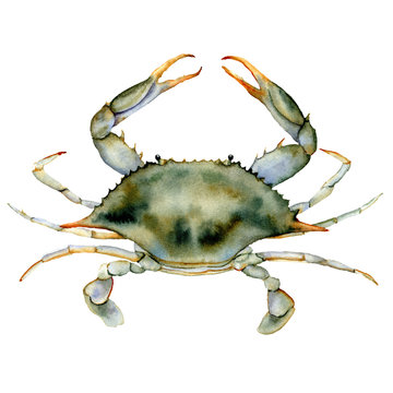 Watercolor Blue crab. Underwater animal illustration isolated on white background. For design, prints or background.
