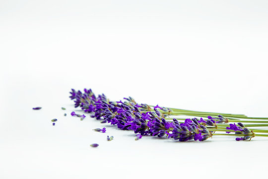 Flowers of Lavander; background with flowers