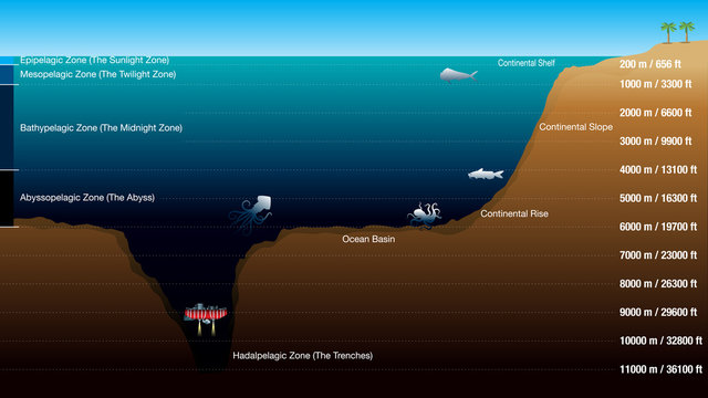 Graphic shows the 5 zones according to the depth of the ocean, with scale in meters and feet. The graphic includes silhouettes of fish, octopus, squid and submarine. Vector image