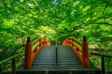 京都 北野天満宮 もみじ苑の鶯橋 新緑