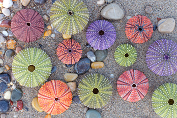 wet sand beach and colorful sea urchins close up top view