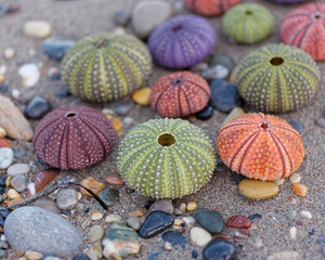 wet sand beach and colorful sea urchins close up