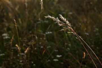 Fotoväggar - sommerwiese