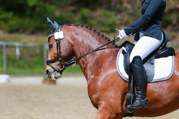 Foto op Plexiglas Golf Dressage horse during the test in a dressage tournament..