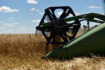 A reel on a combine collects wheat in Corn,