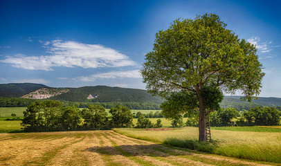 green tree and spring landscape