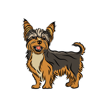 Yorkshire terrier dog - isolated vector illustration - Vector