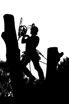 Vector silhouette of an Arborist at work with a chainsaw up a tree.