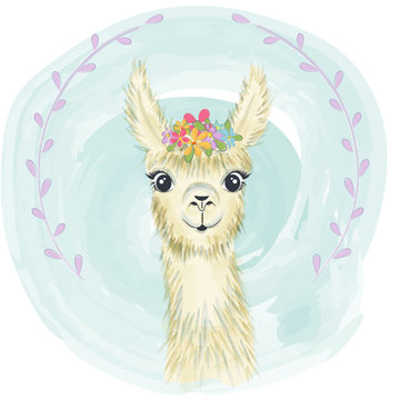 Happy cute little llama smiling