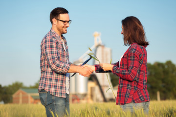 Smiling happy young male and female farmers or agronomists shaking hands in a wheat field. Inspecting crops before the harvest. Organic farming and healthy food production