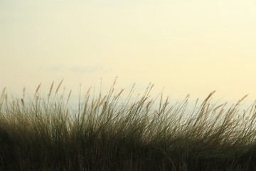 Tall grass over the sea view at sunrise Wall mural